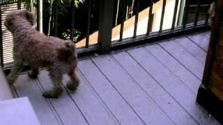 自家繁殖・直売にて子犬を販売しております多摩ドッグハウスの鈴木です...
