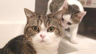 お風呂場で何かやってる大きいねこと小さいねこ。-Maru&Miri spend the night in the bathtub.-