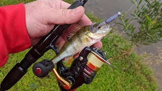 Fishing for European Perch in Australia Redfin Perch