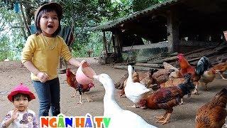 Bé cho gà ăn mải chơi ngân hà tí quên mất đi chăn gà với ngan ❤Ngân hà TV❤