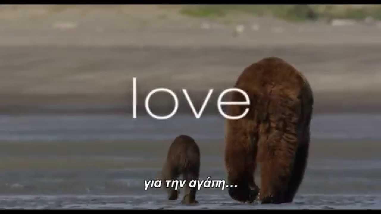 ΑΡΚΟΥΔΕΣ (Bears) - Official Trailer