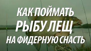 Как ловить рыбу лещ на фидер. Рыбалка в Тюмени на реке Тура(Как ловить на фидер речного леща. Фидерная ловля леща на фидер состоялась на рыбалке в Тюмени, река Тура...., 2015-08-03T13:56:42.000Z)