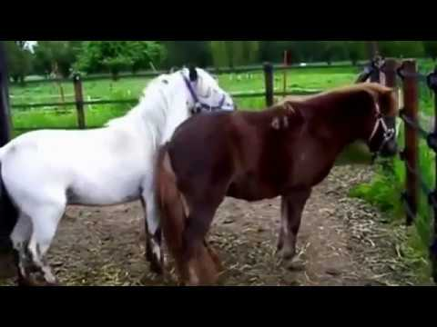 Animalsex story