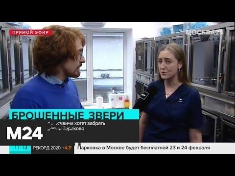 Москвичи готовы забрать брошенных в деревне Терехово животных - Москва 24
