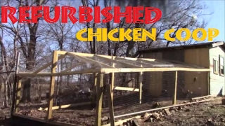 Refurbished Chicken Coop & Some Sheep