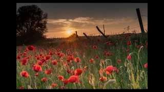 Nylon Moon - Poppy field (orange)