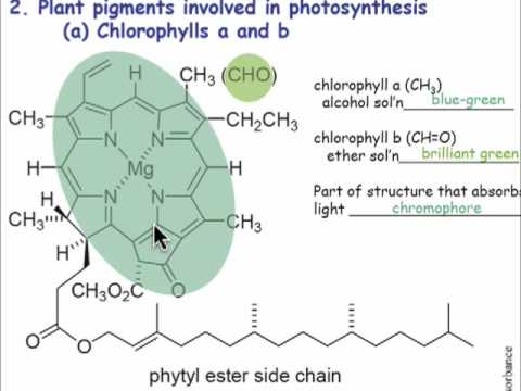 Pigments and Chromophores in Nature (3.7)