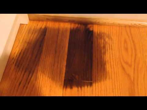 how to remove pet urine stains from hardwood floors - youtube