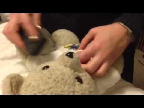 Teddy Bear Cleaning 101