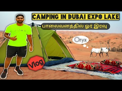 Night Camp at Dubai desert & Cooking near lake | our first VLOG | Exploring the world