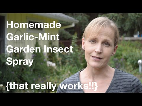 Homemade Garlic-Mint Garden Insect Spray {that really works!!} - AnOregonCottage.com