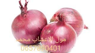 كيف تستعمل البصل في علاج الضعف الجنسي 0657890401