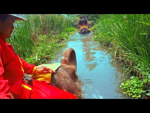 elephant-ride-in-the-water---thailand-travel-4k-damnoen-saduak-district.-На-слоне-в-воде-и-на-суше.