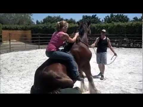 Amazing Ride of an unbroke 2 year old Clydesdale
