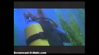 Decades of Horror: Shark Zone Sharks