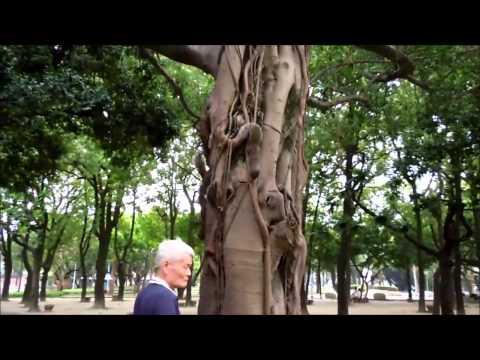 台北二二八和平公園のリス 228 Peace Memorial Park squirrel