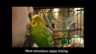 Well-Adjusted Parakeet, Ridiculous Human