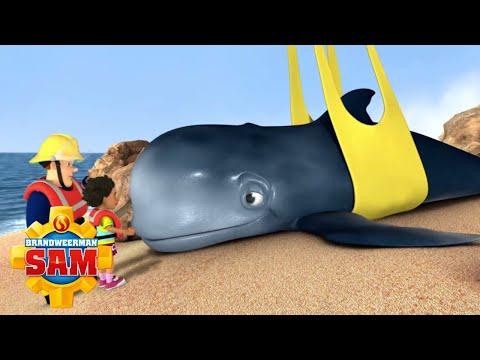 De walvis redden!