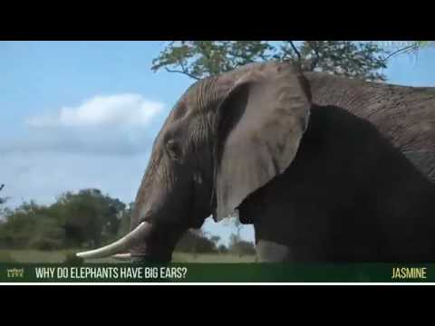 Wild Earth Africa sunset 1-27-2017 Part 1 Ellie at the start