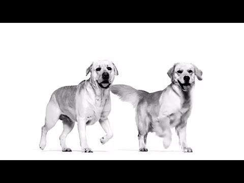 Royal Canin. Breed Health Nutrition