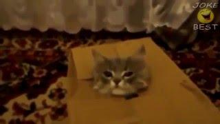 Новые видео приколы с кошками hd Подборка 1