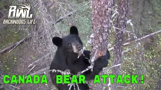 Bear Attack! - Backwoods Life 10.6