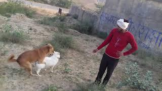 Tohar Mot Hamar chhot Jija paratha