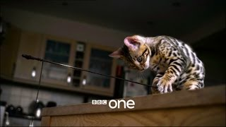 Pets - Wild at Heart: Trailer - BBC One