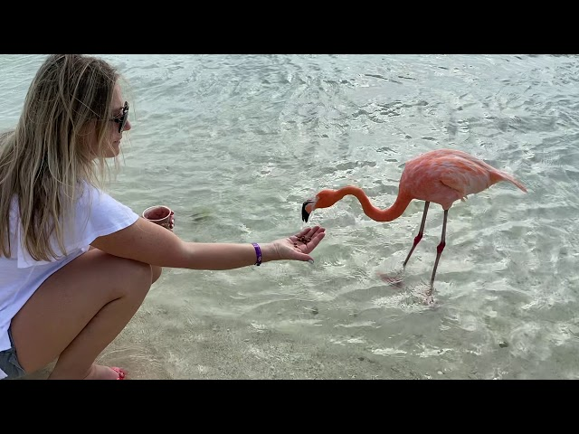 HANGING OUT WITH FLAMINGOS IN ARUBA