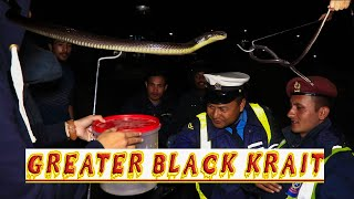 Big Krait in Pokhara | Rescue | Chhorepatan | Rohit Giri |