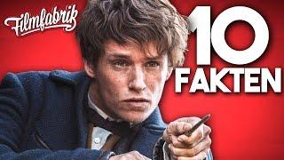10 Fakten zu PHANTASTISCHE TIERWESEN UND WO SIE ZU FINDEN SIND