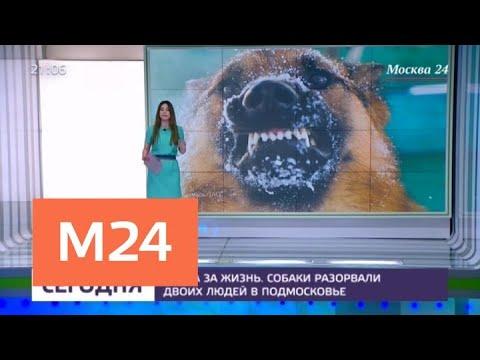 Эксперты высказались о нападении собак в Подмосковье - Москва 24