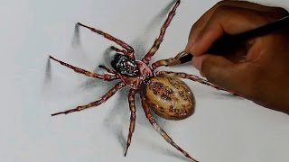 Spider Drawing with Prismacolor Verithin