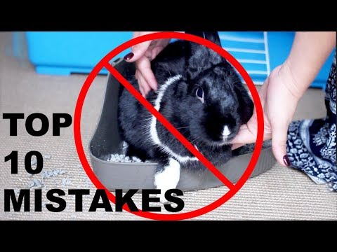 TOP 10 MISTAKES RABBIT OWNERS MAKE