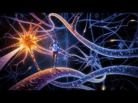 Как мозг учится новому Образование нейронных связей