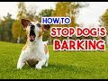 How to Train your Dog not to Bark   Stop Dog Barking
