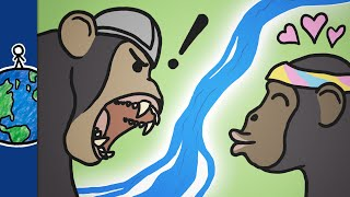 How This River Made Chimps Violent