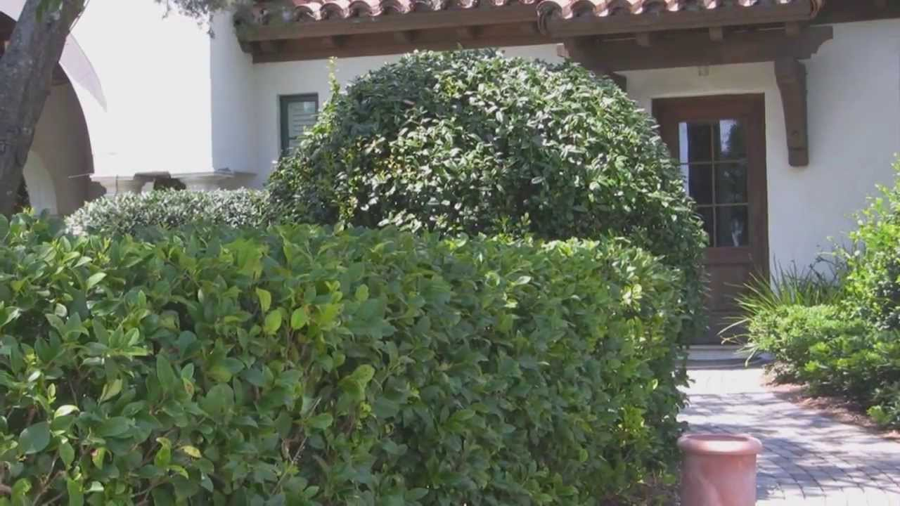 Living Privacy Fence Ligustrum Privacy Screen Living Privacy Fence Plant Bush Block