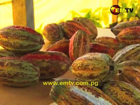 Cooperative in East New Britain Makes It into Cocoa  of Excellence Exhibition in Paris