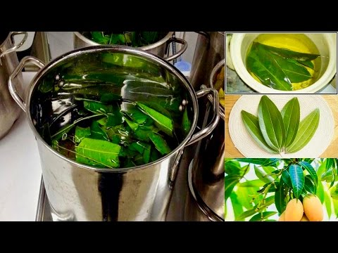 Boil Mango Leaves For These Incredible Health Benefits