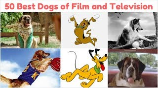 50 Best Dogs of Film and Television
