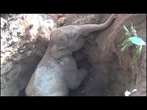 Baby Elephant Rescued From Well In Kerala | Mother Elephant Thanks With Trunk