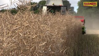 Harvest 2017: Winchester OSR grower pleased with 4.5t/ha