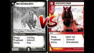 Walki Zwierząt - Nosorożec Vs Hipopotam