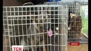 Залишених в аеропорту Донецька собак визволили