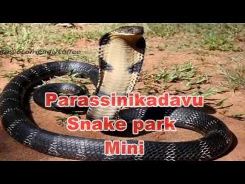 Snakepark Parassinikadavu...
