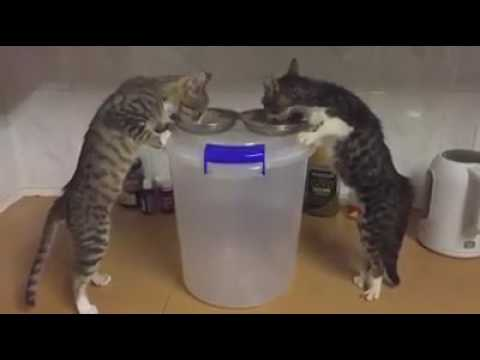 Clever Kittens