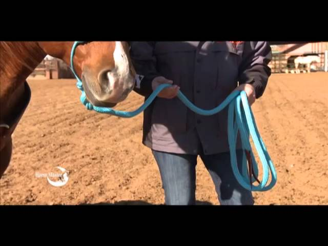 Julie Goodnight:  Quick Tip, How to lead a horse properly