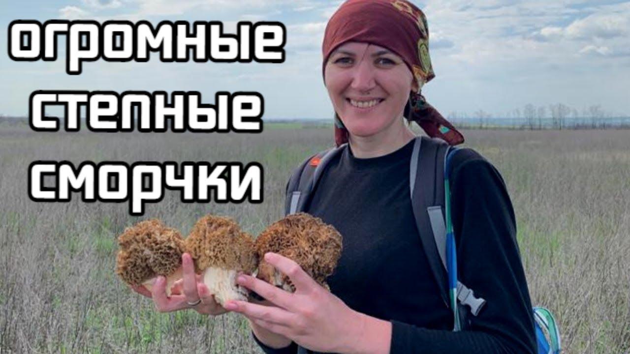 Степных сморчков так много - еле унесли и приготовили! Тихая охота в Ростовской области 2021