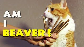 Why Does Talking Cat Eat Sticks? #RFC